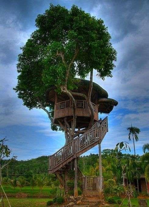 casa albero2