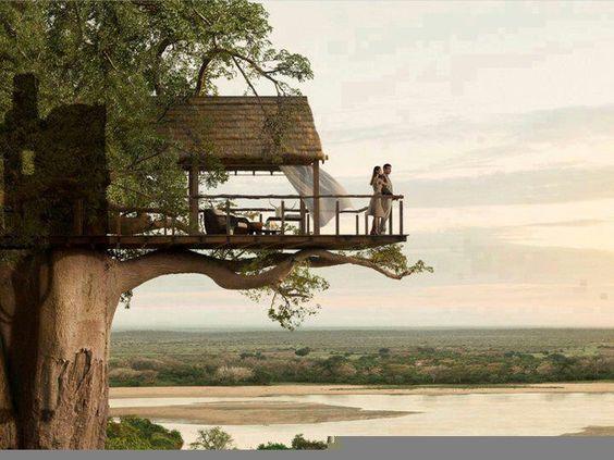 casa albero7